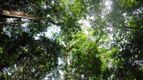 Treetops in the rain forrest north sulawesi, indonesia. Wide ground view of treetops in the rain forrest north sulawesi, indonesia stock video footage