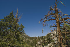 Treetops San Jacinto State Park Stock Photo