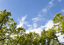 Treetops in the sky Stock Images