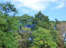 Treetops Royalty Free Stock Images