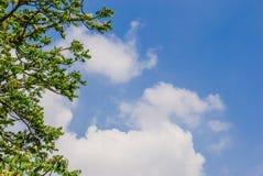 Treetops som inramar den soliga blåa himlen Fotografering för Bildbyråer