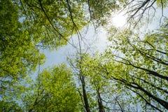 Treetops-Sommer-Himmel Lizenzfreie Stockfotografie