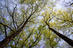 Treetops in spring Stock Photo