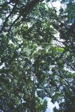 Treetops in summer Stock Photography