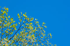 Treetops Royalty Free Stock Photo