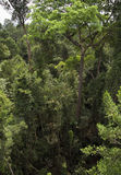 Treetops in tropical rain forest Royalty Free Stock Photo