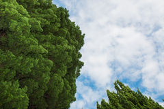 Treetops of two trees. Under the cloudy, blue sky stock photos