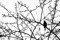 Treetops und ein Vogel Lizenzfreies Stockfoto