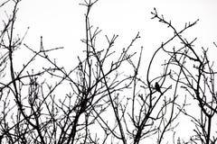 Treetops und ein Vogel Lizenzfreie Stockbilder