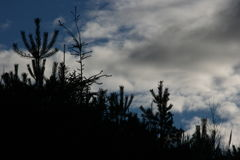 Treetops und Himmel demgegenüber lizenzfreie stockfotografie