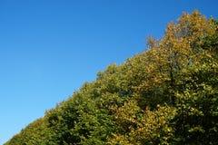 Treetops und klarer Himmel an einem sonnigen Tag Lizenzfreies Stockfoto