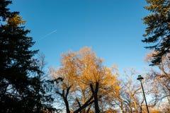 Treetops von verschiedenen Bäumen mit den grünen und orange Blättern im Waldwald mit blauem Himmel über selektivem Fokus des Natu stockbild