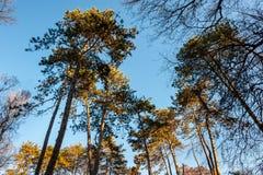 Treetops von verschiedenen Bäumen mit den grünen und orange Blättern im Waldwald mit blauem Himmel über selektivem Fokus des Natu stockfotos