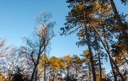Treetops von verschiedenen Bäumen mit den grünen und orange Blättern im Waldwald mit blauem Himmel über selektivem Fokus des Natu lizenzfreies stockbild