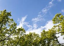 Treetops w niebie Obrazy Stock