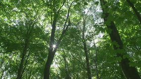 Treetops where sun rays shining through stock video footage