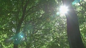 Treetops where sun rays shining through stock video