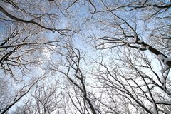 Treetops in winter Royalty Free Stock Photos