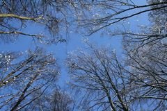 Treetops in winter Royalty Free Stock Photography