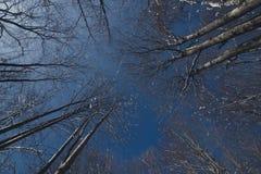 Treetopsna Arkivfoton