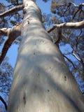 treetrunck Arkivbild