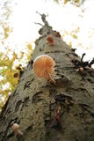treetrunk гриба Стоковые Изображения