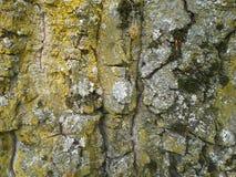 Treetrunk Royaltyfri Foto