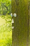 Treetrunk affronta Fotografia Stock