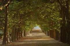 Treetunnel i \ Jardin des-plantes \ - Paris Arkivbild