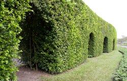 treevägg Royaltyfri Fotografi