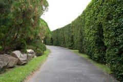 treevägg Arkivfoto