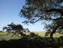 treevåtmark royaltyfria foton