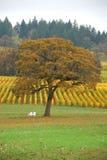 TreeVineyard image libre de droits