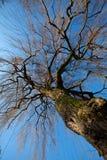 treevinter Arkivfoton