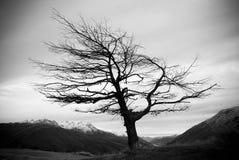 treevinter Royaltyfri Foto
