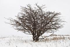 treevinter Arkivbilder