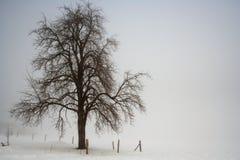 treevinter Arkivfoto