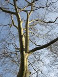 treevinter Royaltyfri Fotografi