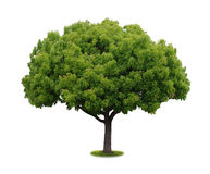 treewhite för bakgrund no6 Royaltyfri Fotografi
