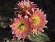 Trefaldig blom Arkivfoto