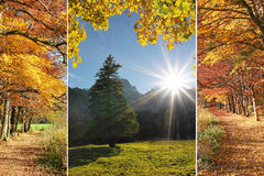 Trefaldiga guld- oktober Royaltyfri Bild