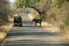 Treffen des kleinen Elefanten Lizenzfreies Stockfoto