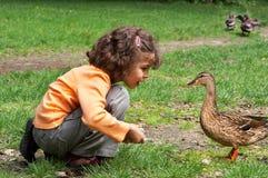Treffen einer Ente Stockfoto