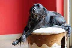 Treffen Sie Donna, einen Bastard, der streunende Hund, der in einer Wiese auf der griechischen Insel von Lesbos gefunden wird Lizenzfreies Stockfoto