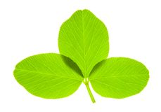 Trefoil. Detail of a trefoil leaf blade of clover - macro Royalty Free Stock Images