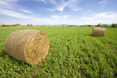 Trefoil bale in field Stock Photos
