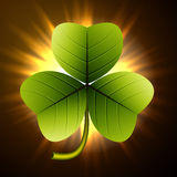 Trefoil clover Stock Photography