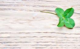 Trefoil. Four leaves trefoil on wooden BG Royalty Free Stock Images