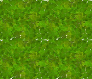 Trefoil green leaves seamless background Royalty Free Stock Photography