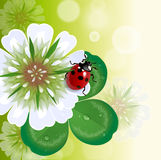 Trefoil with ladybug Royalty Free Stock Photos